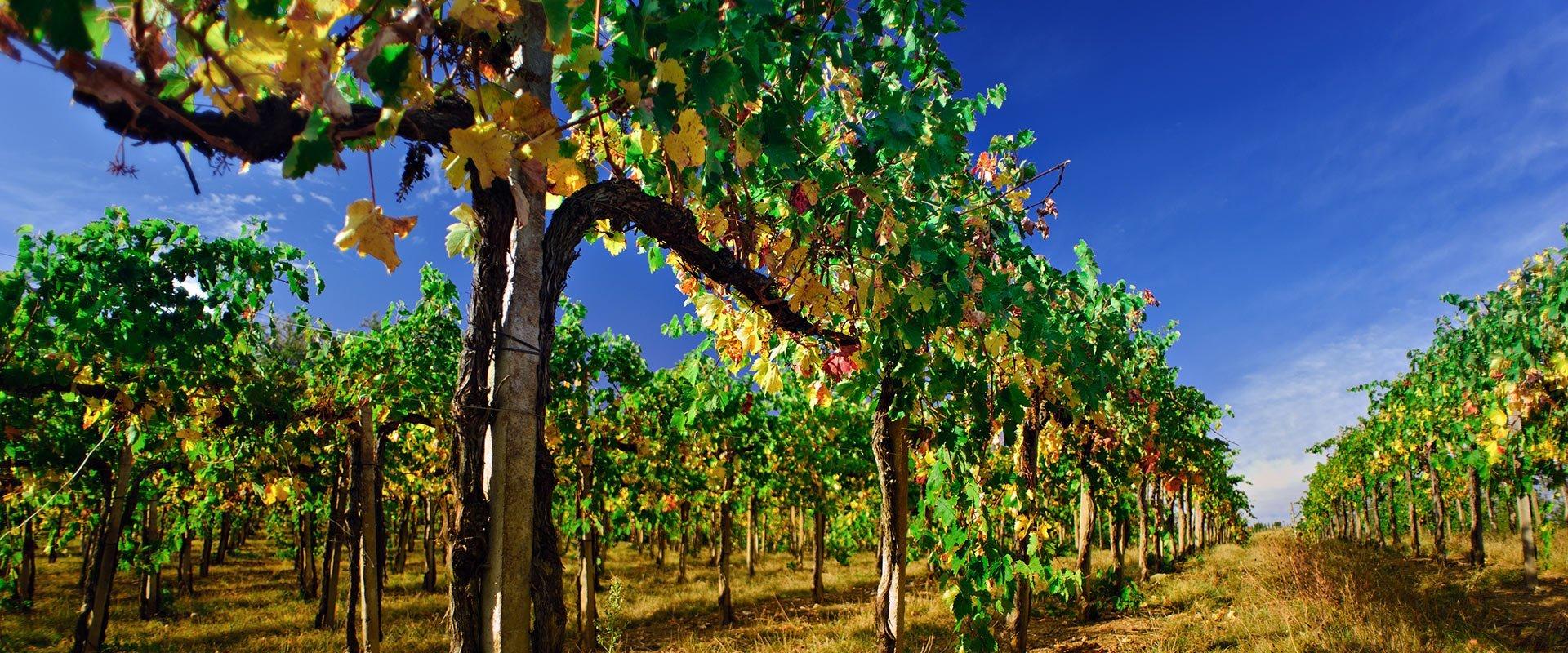 daios hotel wine road